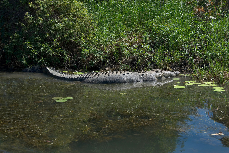Male Crocodile 1, Alligator River, Kakadu National Park - Northern Territory, Australia