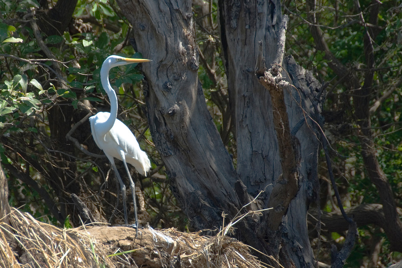 Bird on Log, Alligator River, Kakadu National Park - Northern Territory, Australia