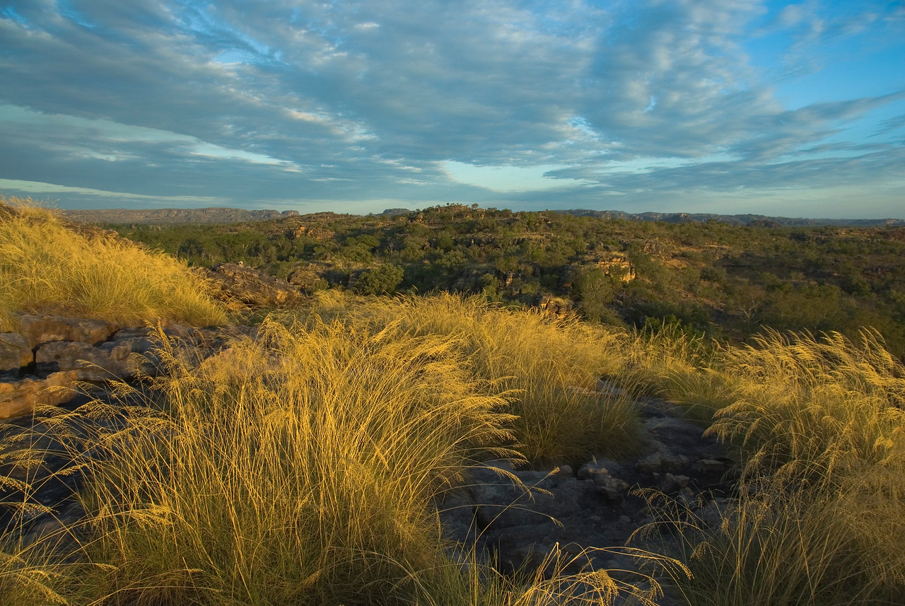 Grass and Landscape, Kakadu National Park - Northern Territory, Australia
