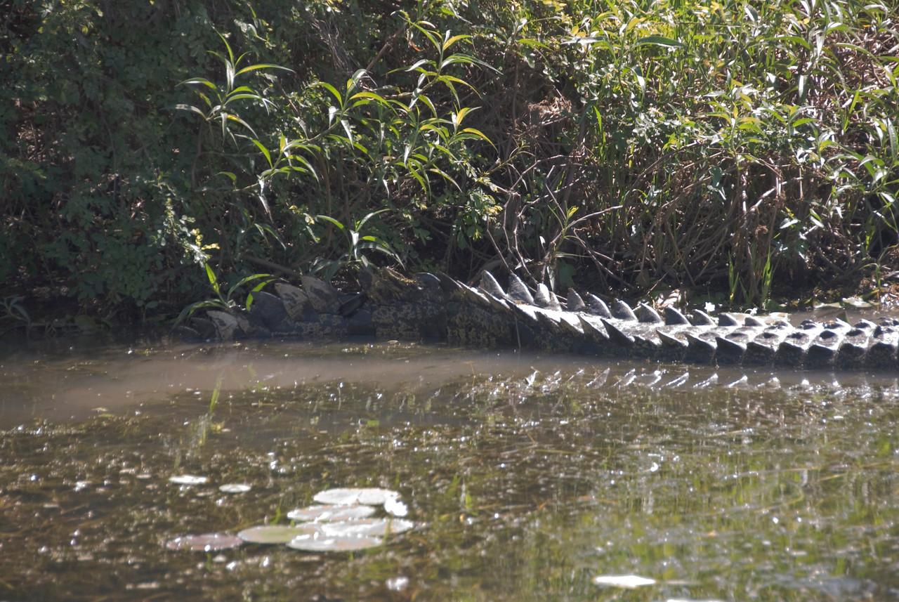 Crocodile Tail, Alligator River, Kakadu National Park - Northern Territory, Australia