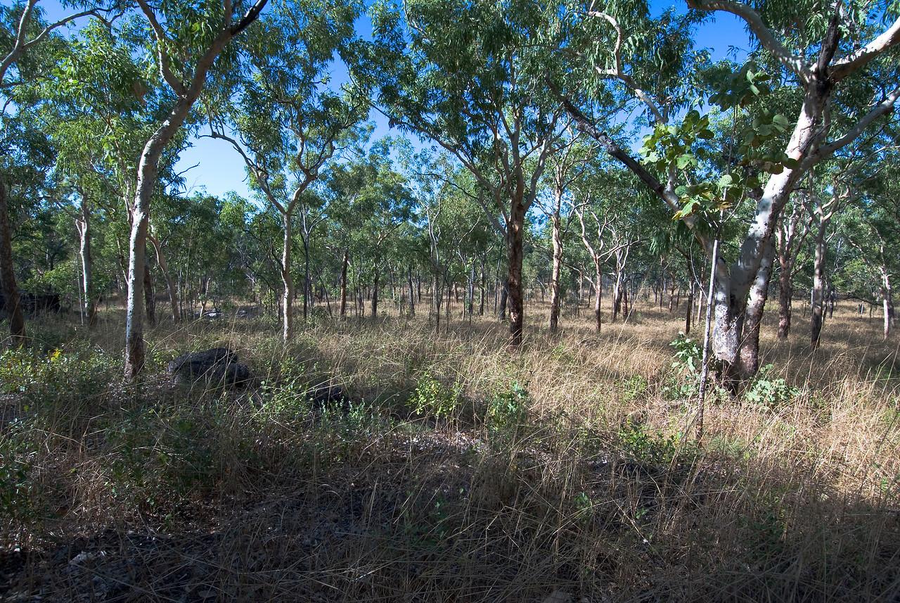Grass and Forest, Anbangbang, Kakadu National Park - Northern Territory, Australia
