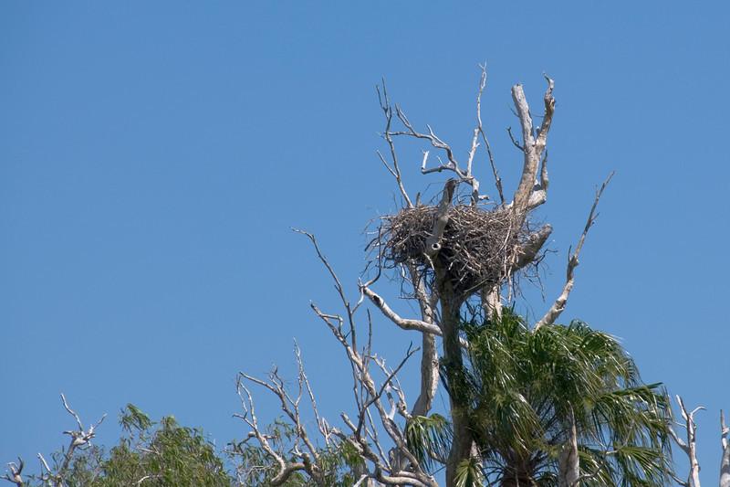 Sea Eagle Nest, Alligator River, Kakadu National Park - Northern Territory, Australia