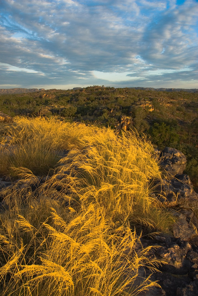 Clouds and Grass at Sunset, Kakadu National Park - Northern Territory, Australia