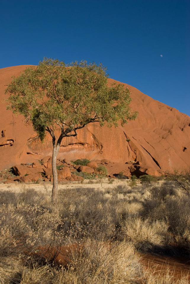 Tree, Moon, Uluru - Northern Territory, Australia