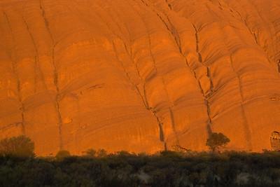 Tree and Uluru at Sunrise 2 - Northern Territory, Australia