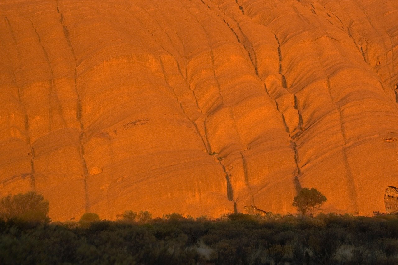 Tree and Uluru at Sunrise 2 - Northern Territory, Australia