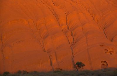 Tree and Uluru at Sunrise - Northern Territory, Australia