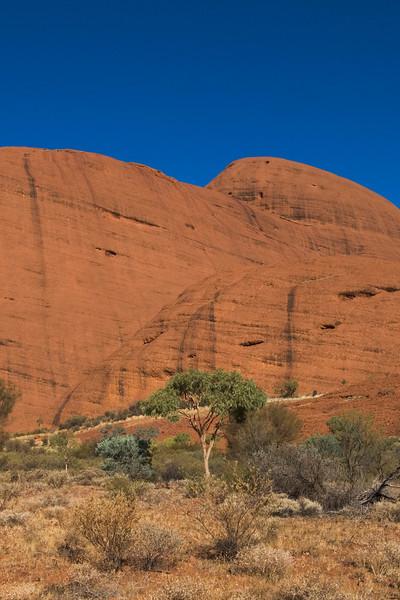 Lone Tree at Kata Tjuta - Northern Territory, Australia