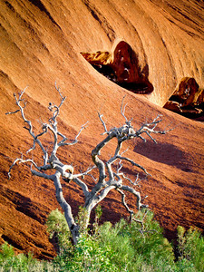 Uluru Snag