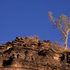 Lone gum tree at Ubir in Kakadu National Park.