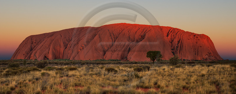 AUOU19 Uluru Sunset Panorama