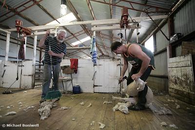 Shearing (Colour)