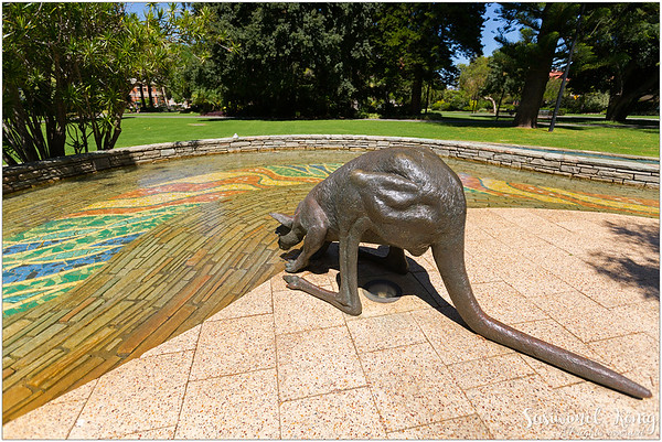 It's hot… and we all can get dehydrated. Big Kangaroo on St. Georges Terrace
