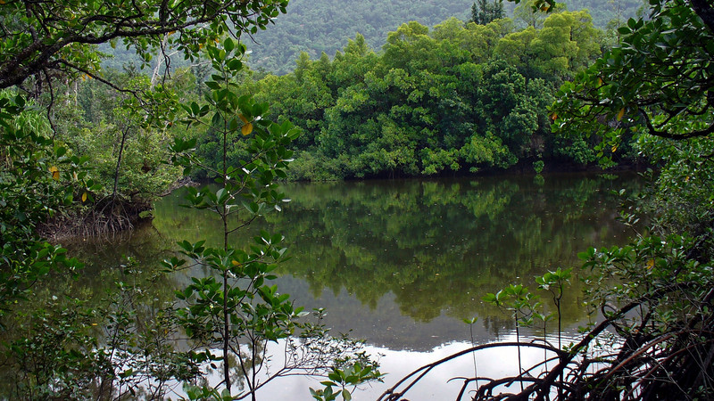 Mangroves and rainforest at Cape Tribulation.
