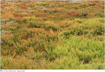 Colorful salt tolerant plants : Suaeda and Common Glasswort