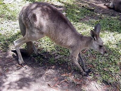 23   Australia Zoo