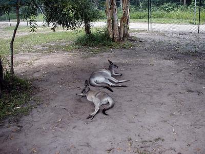 19   Australia Zoo