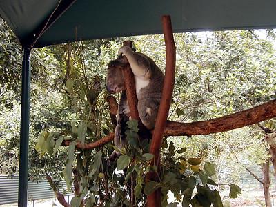 24   Australia Zoo