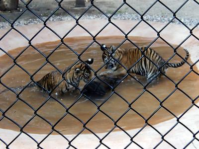 16   Australia Zoo
