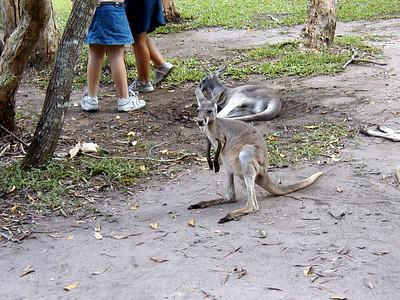 21   Australia Zoo