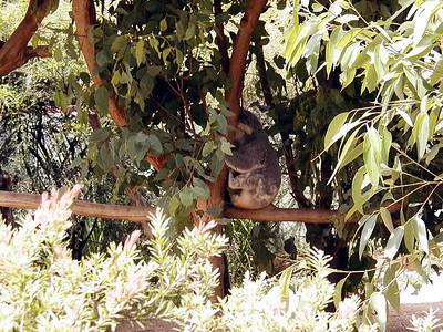 12  Australia Zoo