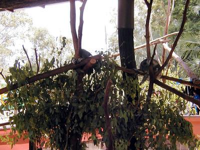 14   Australia Zoo