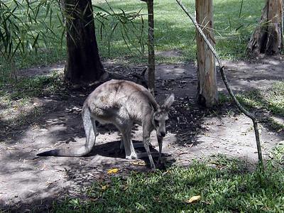 22   Australia Zoo