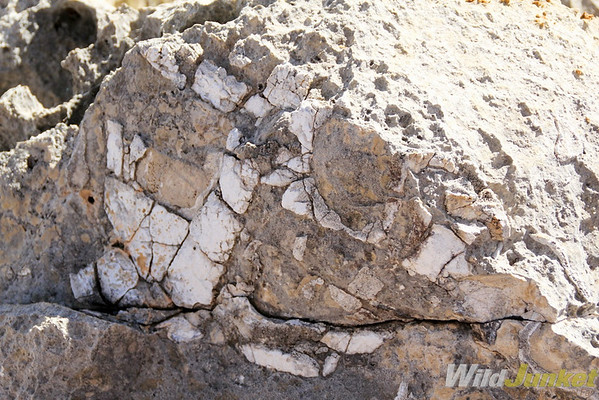 fossils dating back to 25 million years old