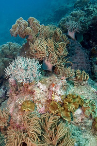 Seascape 4, Great Barrire Reef - Cairns, Queensland, Australia