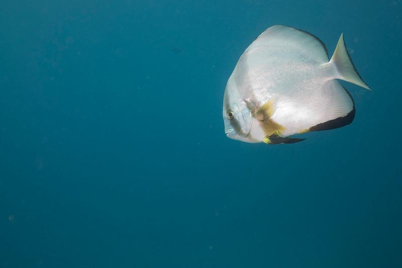 Fish 4, Great Barrire Reef - Cairns, Queensland, Australia