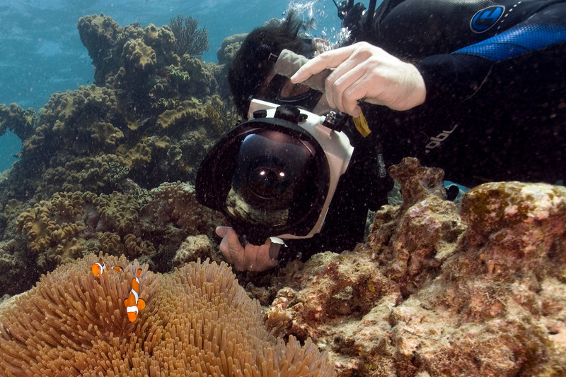 Clownfish and Anenome 3, Great Barrire Reef - Cairns, Queensland, Australia