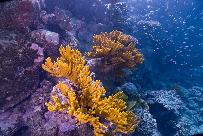 Leather Coral 4, Great Barrire Reef - Cairns, Queensland, Australia