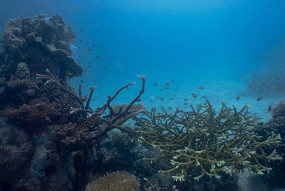 Seascape 2, Great Barrire Reef - Cairns, Queensland, Australia