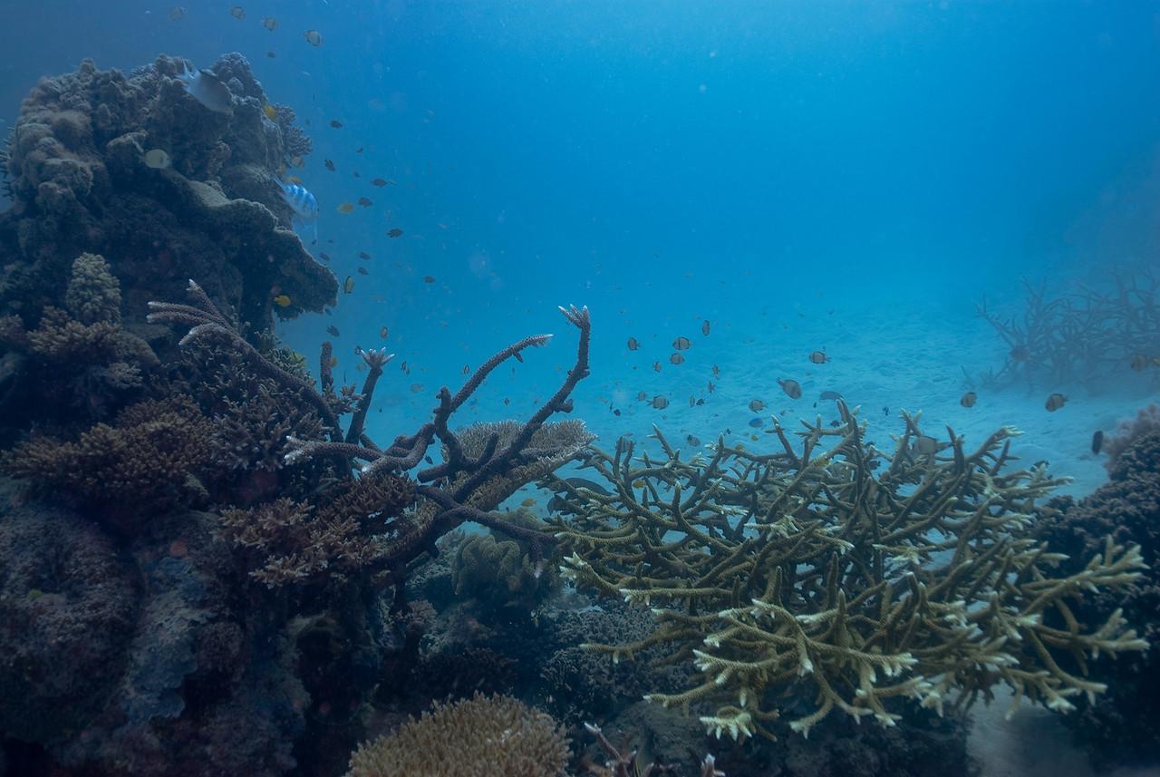 Seascape 2, Great Barrire Reef - Cairns, Queensland, Australia