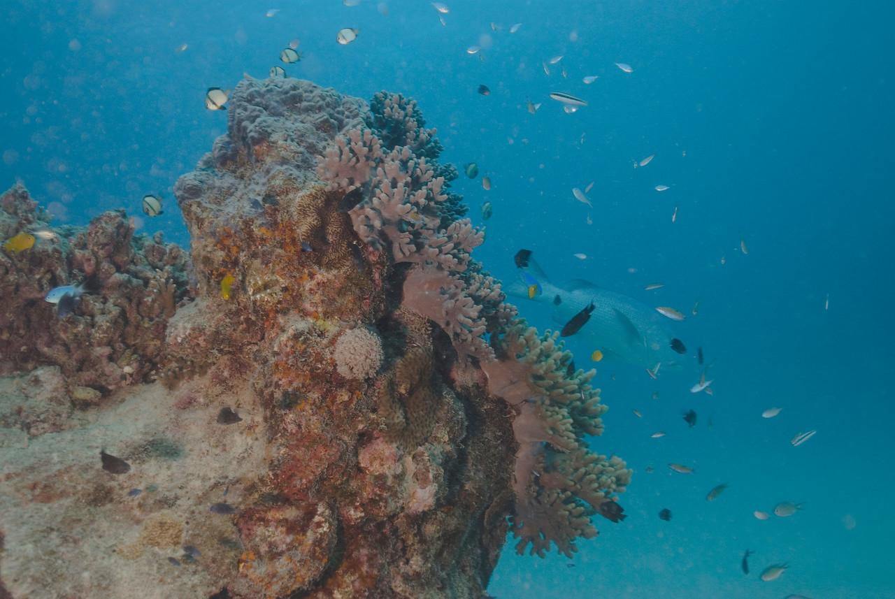 Seascape 3, Great Barrire Reef - Cairns, Queensland, Australia