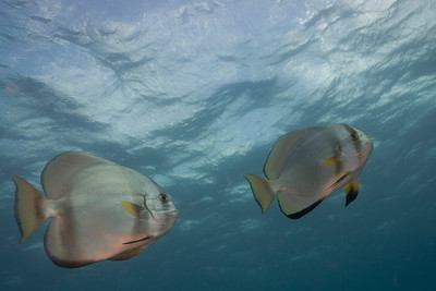 Fish 1, Great Barrire Reef - Cairns, Queensland, Australia