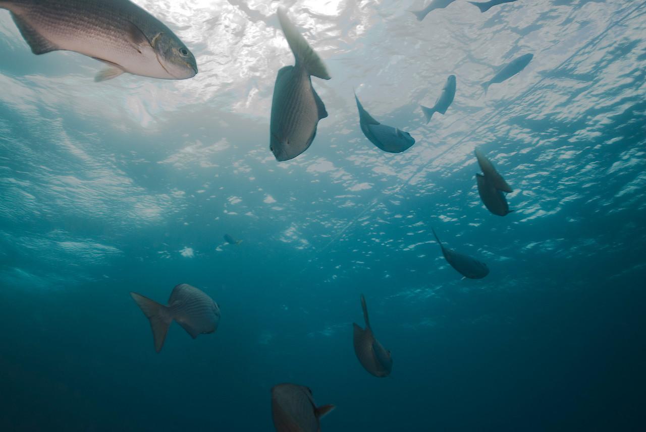 Fish 3, Great Barrire Reef - Cairns, Queensland, Australia