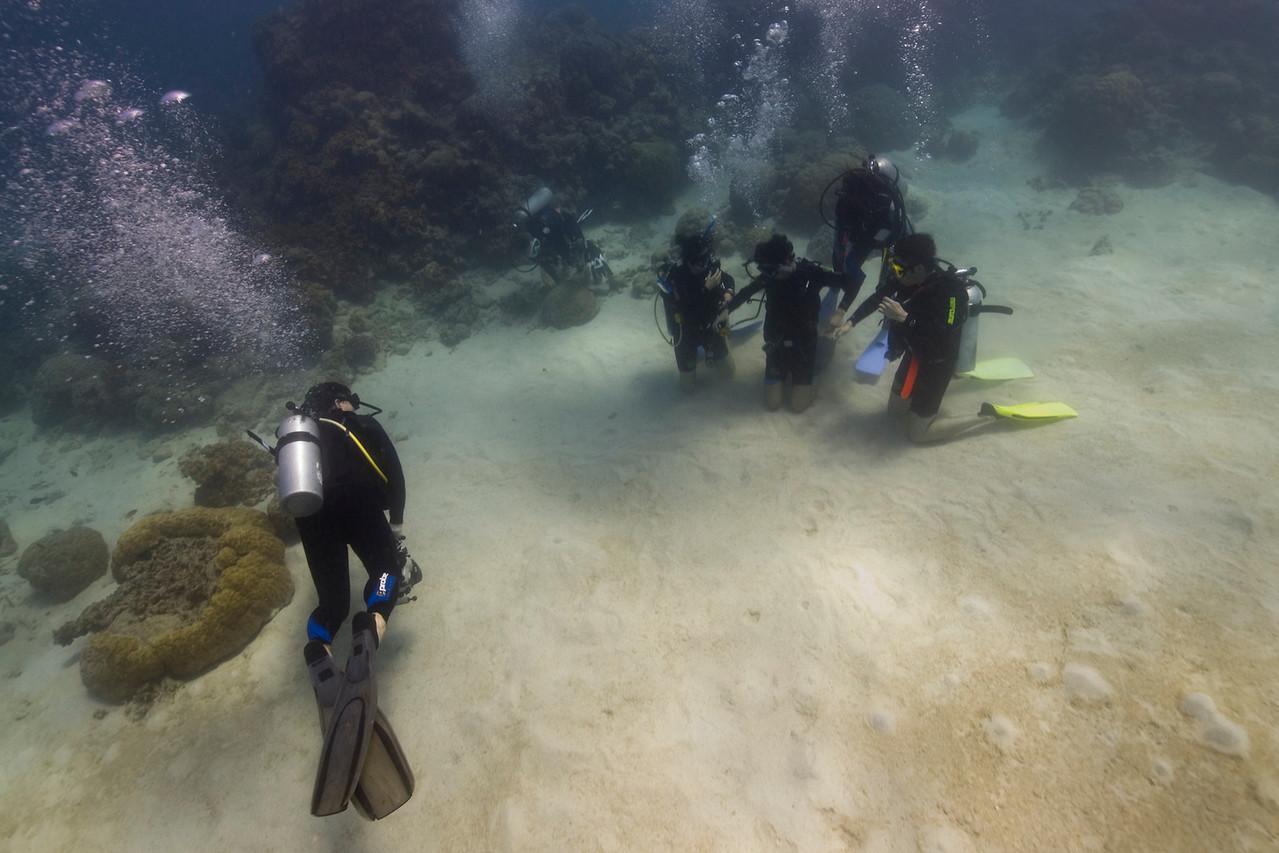 SCUBA Divers 1, Great Barrire Reef - Cairns, Queensland, Australia