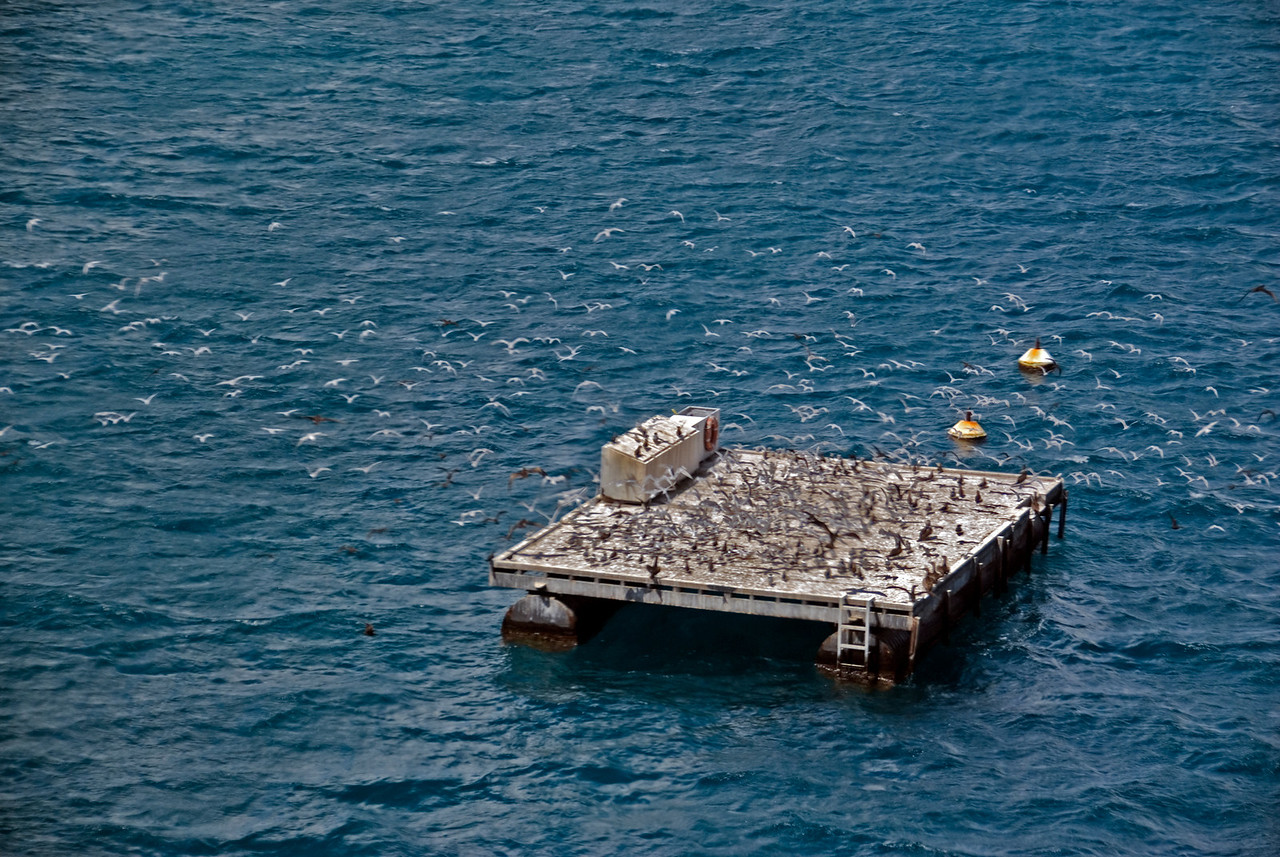 Helicopter Landing Platform 3, Great Barrier Reef, Whitsunday Islands - Queensland, Australia