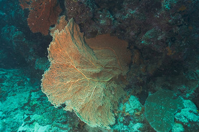 Fan 3, Great Barrire Reef - Cairns, Queensland, Australia