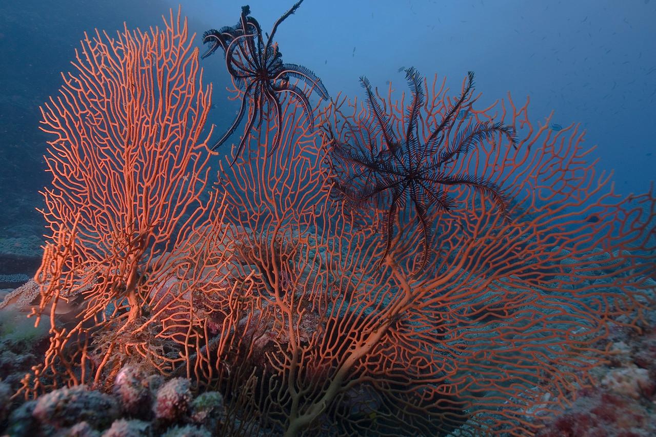 Fan 2, Great Barrire Reef - Cairns, Queensland, Australia