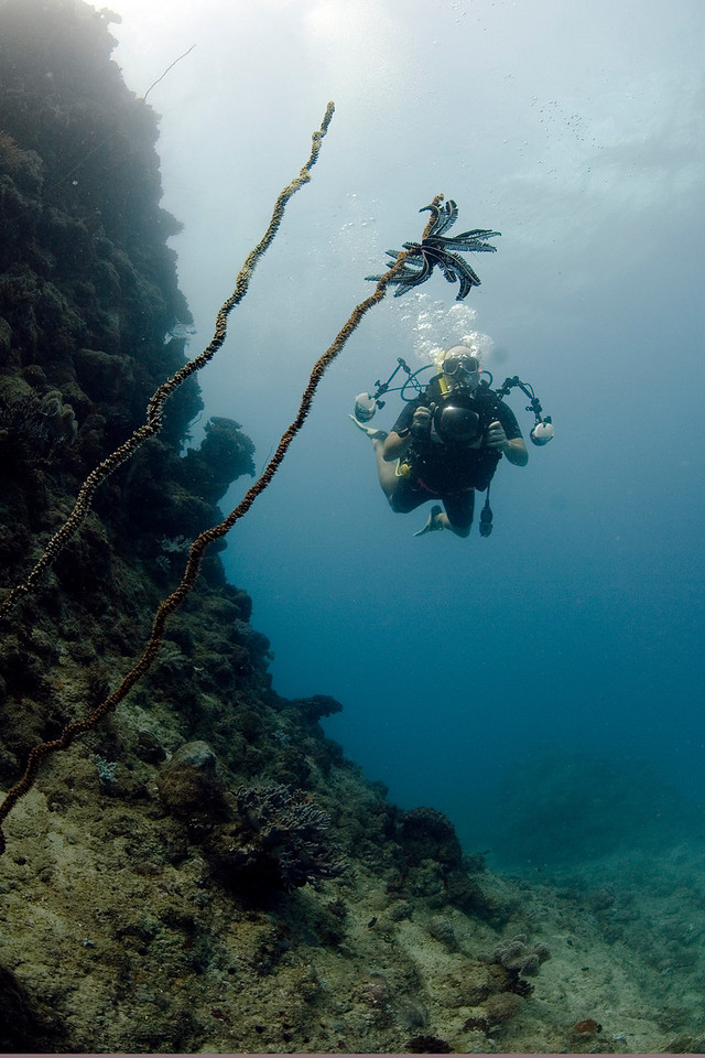 Me, Camera, and Gorgonia, Great Barrire Reef - Cairns, Queensland, Australia