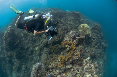 Me, Camera, and Leather Coral, Great Barrire Reef - Cairns, Queensland, Australia