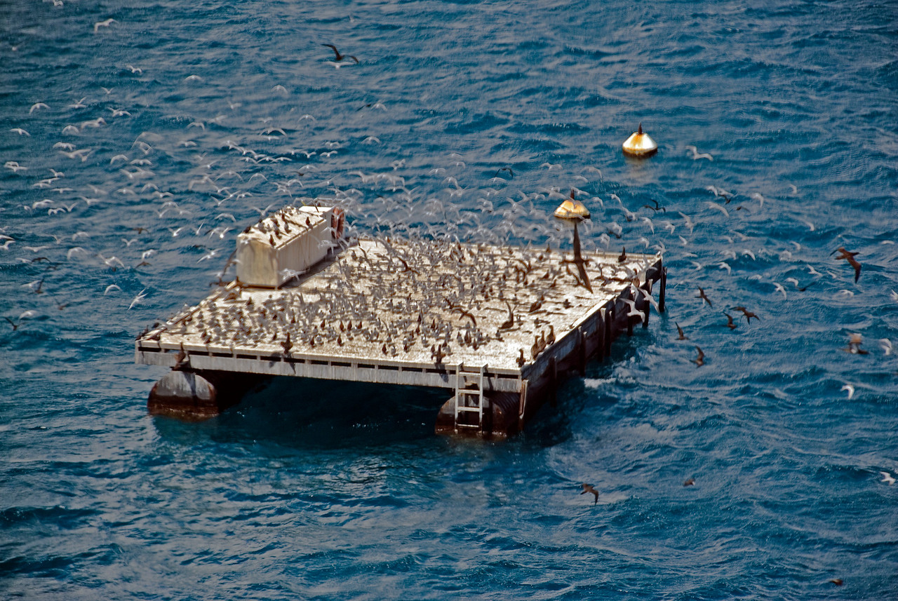 Helicopter Landing Platform 1, Great Barrier Reef, Whitsunday Islands - Queensland, Australia