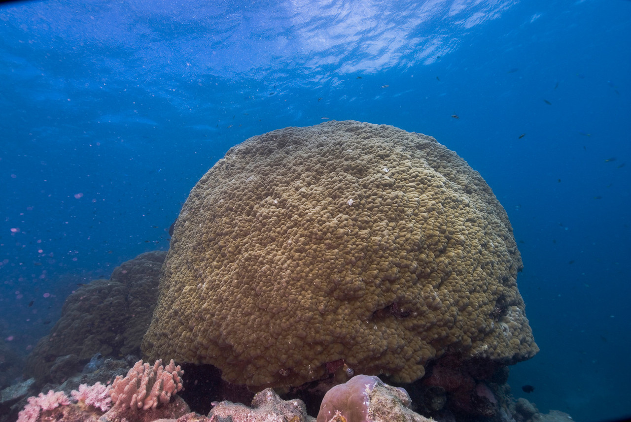 Coral Mound 1, Great Barrire Reef - Cairns, Queensland, Australia