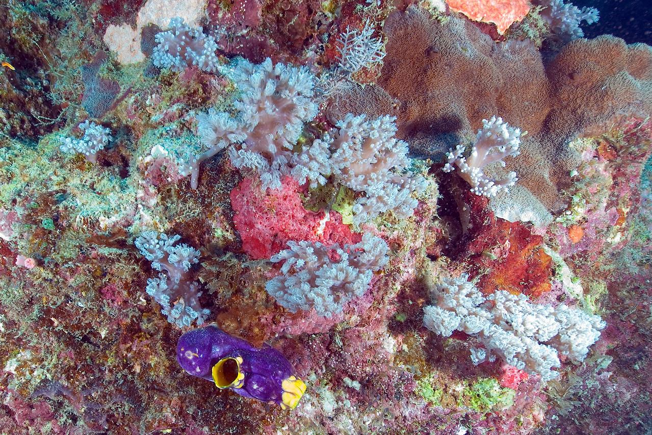 Sea Garden 1, Great Barrire Reef - Cairns, Queensland, Australia