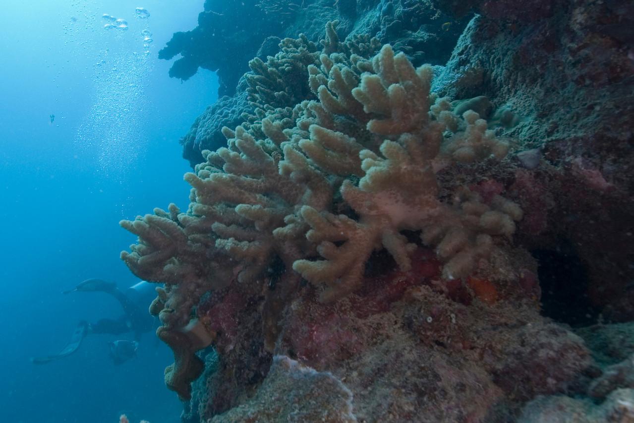 Soft Coral 1, Great Barrire Reef - Cairns, Queensland, Australia