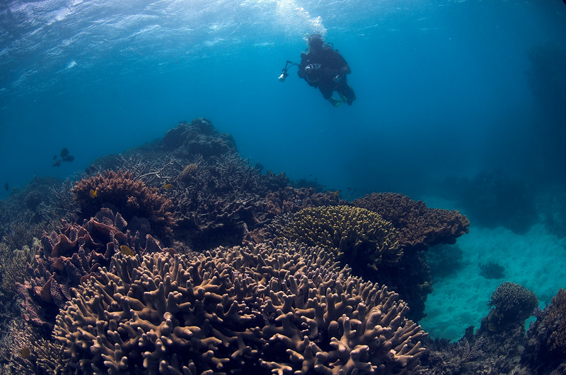 Me, Camera, and Coral 1, Great Barrire Reef - Cairns, Queensland, Australia