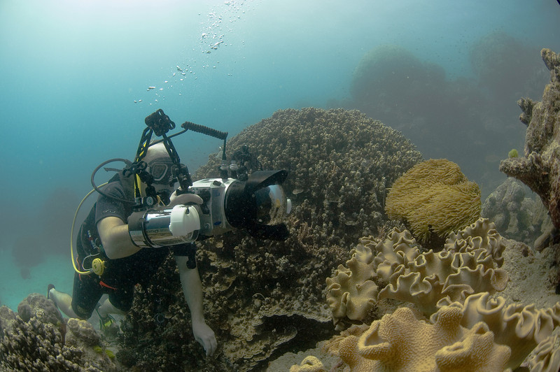 Me, Camera, and Clownfish, Great Barrire Reef - Cairns, Queensland, Australia