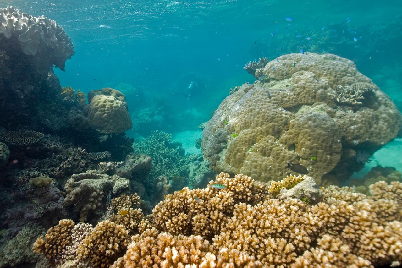 Seascape 1, Great Barrire Reef - Cairns, Queensland, Australia